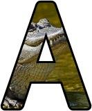Free printable animal lettering, alligator letters for classroom display, scrapbooking, bulletin board headings.