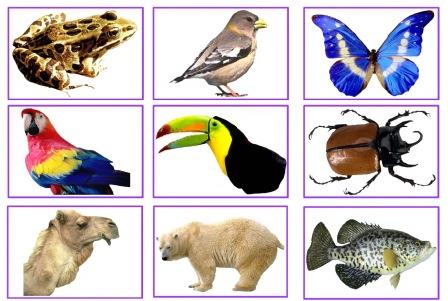 Set of 66 free animal photocards with clear images of different animals.
