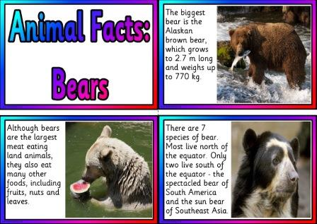 Free printable bear information cards