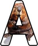 Free printable animal lettering, beaver letters for classroom display, scrapbooking, bulletin board headings.
