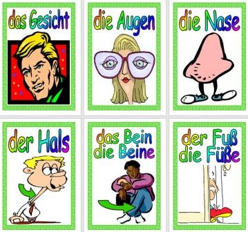 Free German Vocabulary Cards The Body