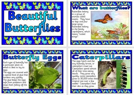 Free Butterflies Posters