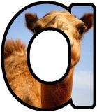 Free printable Camel background instant display lettering sets for classroom display.