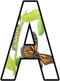 Caterpillar, butterfly life cycle background lettering for display boards