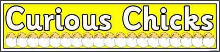 Curious Chicks Banner