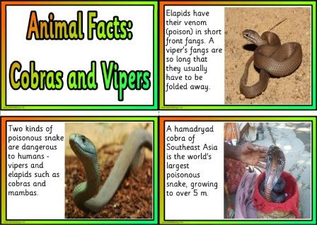 Free Printable Animal Facts Posters - Cobras and Vipers
