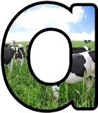 Free printable cows background instant display digital lettering sets for classroom display.