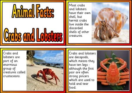 Free printable crabs and lobsters information cards