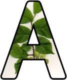 Printable Elm Tree Classroom Display Lettering Sets
