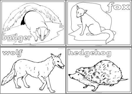 European Animals Colouring Pages