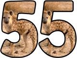 Free printable instant display digital lettering sets with a Hyena photo background.  Great for classroom displays and bulletin boards.