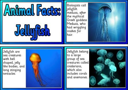 Jellyfish animal facts free printable posters or cards