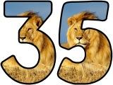 Free printable lion background instant display digital lettering sets for classroom display. Free display lettering.