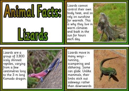 Free printable lizards animal facts cards for display