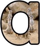 Free printable Meerkat background instant display digital lettering sets for classroom display.