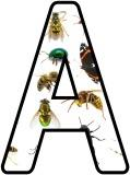 Free printable Mini Beasts, Insects, Bugs photo background classroom display lettering sets.