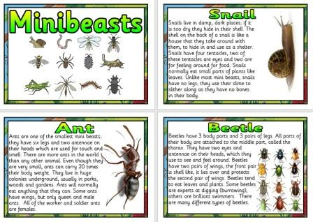 Free Minibeasts Facts Science Posters