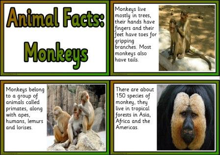 Printable free display cards all about monkeys
