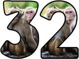Free Monkey background display lettering sets