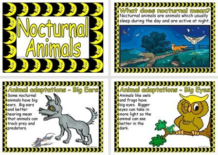 Free Printable Nocturnal Animals Posters