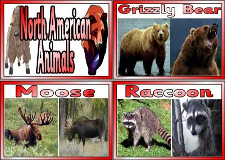 Match the North American Animals to their descriptions Photo Cards