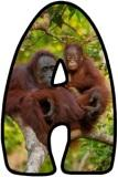 Orangutan background instant display lettering sets for classroom display.
