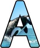 Free printable Orca, Killer Whale background instant display digital lettering sets.