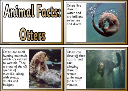 Free printable animal facts cards about otters