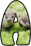 Free printable lettering sets for classroom bulletin display featuring a pair of otters for the background.