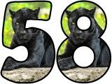 Panther background instant display lettering sets for classroom display.