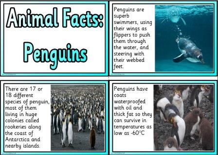 Free printable Penguins information fact cards