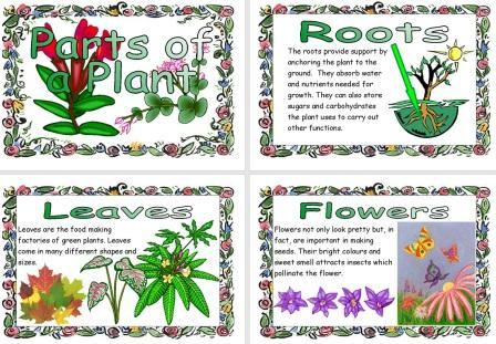 Free Science Resource Parts of a Plant Posters