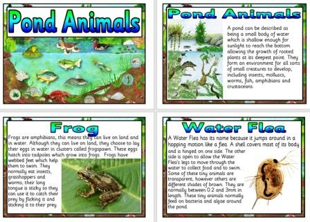 Free Printable Pond Animals Science Posters