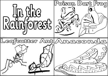 Rainforest Printable Colouring Pages