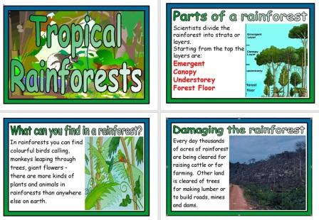 Free Printable Rainforests Geography Posters