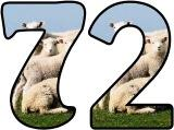 Free printable sheep and lambs background digital lettering sets for classroom bulletin board display.