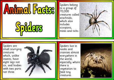 Free Printable Animal Facts Posters - Spiders