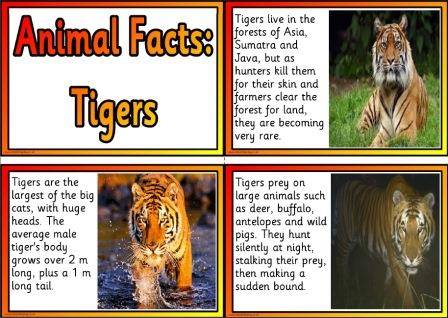 Free Printable Animal Facts Posters - Tigers