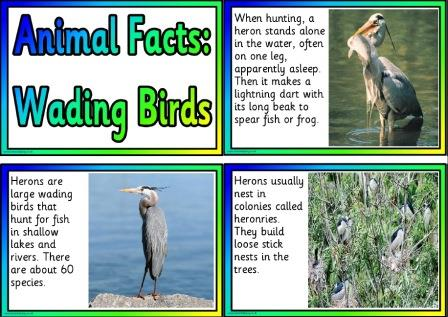 Free printable posters for kids - animal facts, wading birds