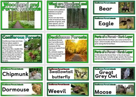 Free printable posters and vocabulary cards all about woodland or forest habitats around the world.